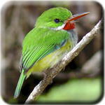 Registration Icon - Jamaican Tody