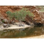 Borderland Tours visits Ormiston Gorge. Photo by Larry Sassaman. All rights reserved