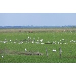 Río Usumacinta Marshes. Photo by Rick Taylor. Copyright Borderland Tours. All rights reserved.