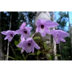 Orchids at Calakmul. Photo by Rick Taylor. Copyright Borderland Tours. All rights reserved.