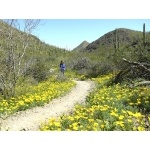 Sonoran Desert in Tucson Mountains. Photo by Rick Taylor. Copyright Borderland Tours. All rights reserved.